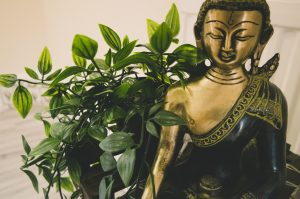 buddha statue and plant in yoga studio
